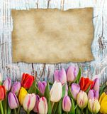 Tulips over blurred green background Stock Photography