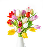 Tulips over white background Royalty Free Stock Images