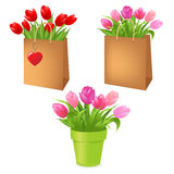 Tulips In Package Stock Image
