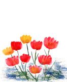 Tulips painted in Watercolor Royalty Free Stock Images