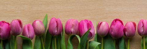 Tulips panorama. It is spring and the tulips show them themselves in all their glory Royalty Free Stock Photography