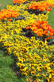 Tulips and Pansies on the flowerbed royalty free stock photography