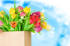 Tulips in the paper bag Royalty Free Stock Photo