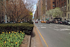 Tulips Park Avenue New York USA Royalty Free Stock Image