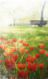 Tulips in the park. Photo in vintage image style. Royalty Free Stock Images
