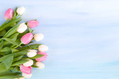 Tulips on pastel blue watercolor background Stock Photo