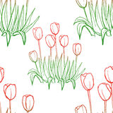 Tulips pattern on white seamless background. Stock Images