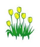 Tulips pattern on white seamless background. Stock Image