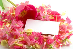 Tulips, Petals And Business Card. Royalty Free Stock Photography