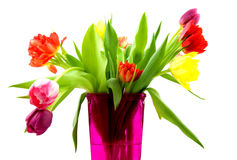 Tulips in a pink vase. Isolated on white background stock photo