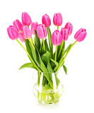 Tulips. Pink tulips in a vase, isolated on awhile background royalty free stock photo