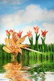 Tulips and pinwheel. With water reflection / Concept theme for spring and summer designs Royalty Free Stock Photos