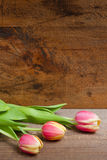 Tulips on a plank Royalty Free Stock Photo