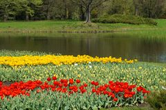 Tulips ,pond  - Spring Royalty Free Stock Images