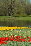 Tulips ,pond  - Spring Royalty Free Stock Photo