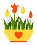 Tulips in pot Royalty Free Stock Images
