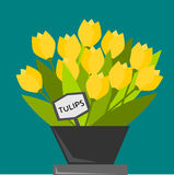 Tulips. In a pot at a marine background vector illustration
