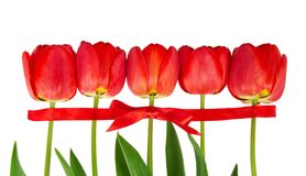 The tulips put in a row Stock Images