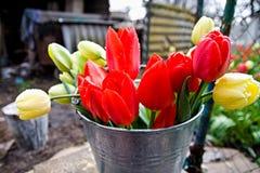 Tulips after rain II stock photography