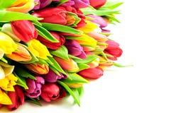 Tulips Rainbow Mixed Bunch Royalty Free Stock Photos