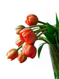 Tulips with raindrops. Beautiful red tulips with little shiny raindrops Stock Photography