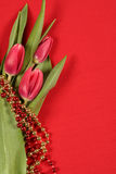 Tulips on red Royalty Free Stock Photo