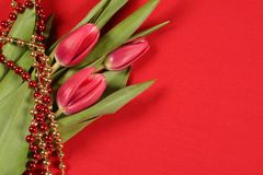 Tulips on red. Beautiful tulips on a red background with festive red and gold beads Stock Photos