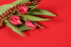 Tulips on red. Beautiful tulips on a red background with festive red and gold beads Royalty Free Stock Image