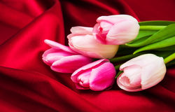 Tulips on a red silk Stock Photography