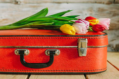 Tulips in red suitcase. woden background Royalty Free Stock Image