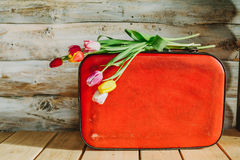 Tulips in red suitcase. woden background Stock Photography