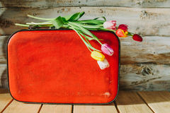 Tulips in red suitcase. woden background Stock Image
