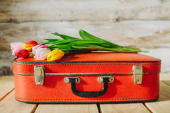 Tulips in red suitcase. woden background Royalty Free Stock Images