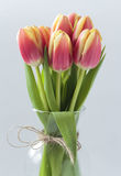 Tulips. Red tulips in transparent vase, close up view Stock Images