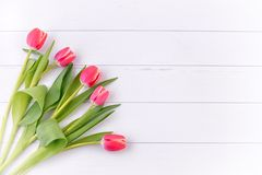 Tulips . Stock Images