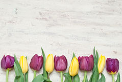 Tulips. Red and yellow tulips on the wood Royalty Free Stock Photo