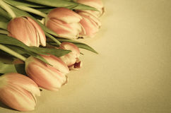 Tulips retro effect Royalty Free Stock Photography