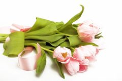 Tulips with ribbon Royalty Free Stock Photos