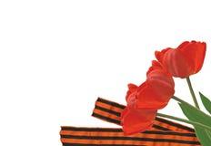 Tulips and ribbon Stock Photo