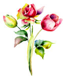 Tulips and Rose flowers Royalty Free Stock Image
