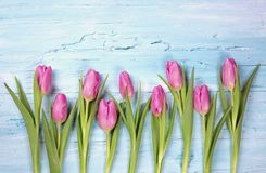 Tulips in a row. Above the blue background Stock Images