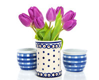 Tulips roxos Foto de Stock