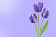 Tulips roxos Ilustração Royalty Free