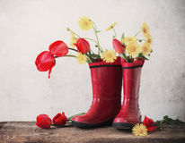 tulips in rubber boots Stock Photography