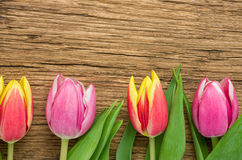 Tulips on a rustic wooden background Stock Image