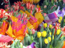 Tulips for sale Stock Photography