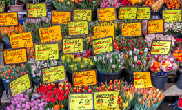 Tulips for sale. Bunches of tulips for sale at market Royalty Free Stock Photo