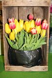 Tulips on sales booth Stock Photography