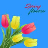 Tulips seamless pattern card3-01. Greeting card.Vector illustration with tulips on a blue background.Bouquet of red and yellow flowers.Can be used as greeting Royalty Free Stock Photo
