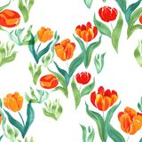 Tulips.Seamless pattern. Flowers, leaves, stems and buds . Use p. Rinted materials, signs, items, websites, maps, posters, postcards, packaging Royalty Free Stock Photography